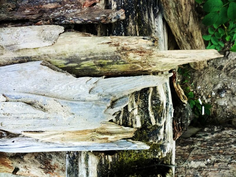 Driftwooddock