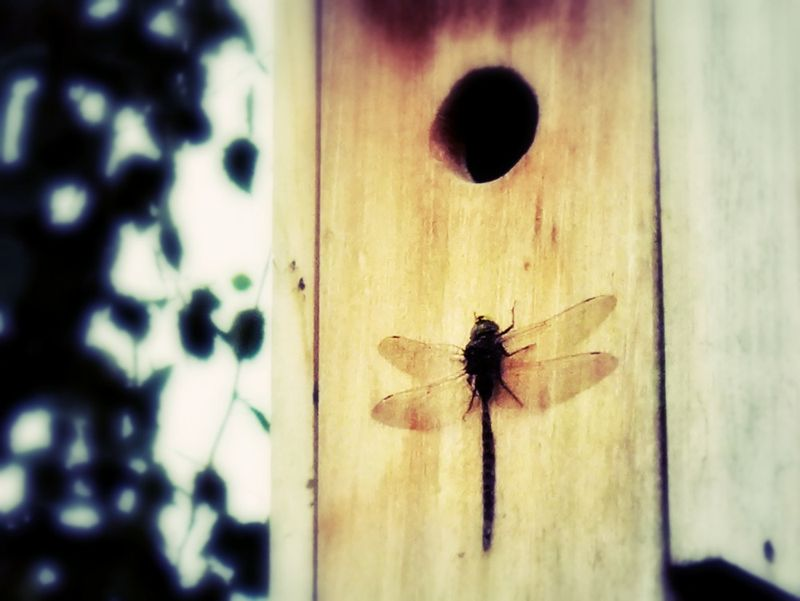 Swallowhouse2